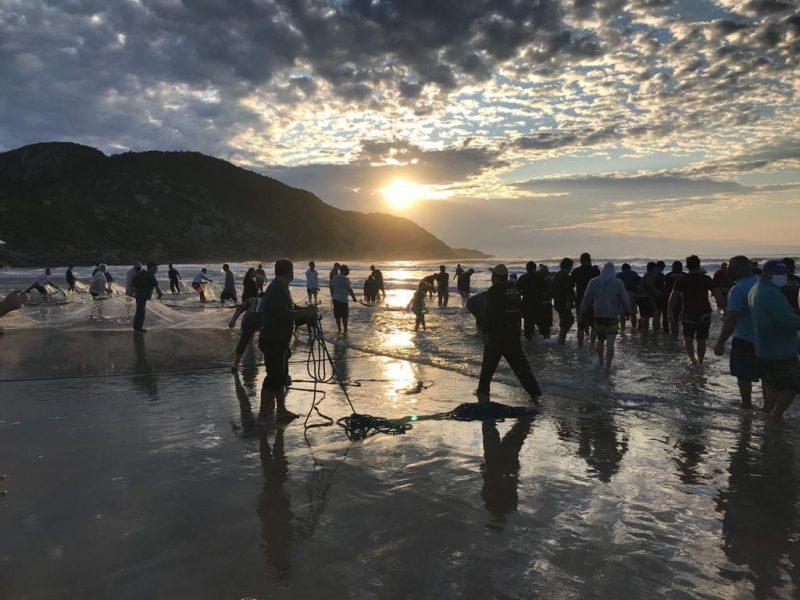 Temporada de pesca da tainha começa neste sábado em SC. Em 2019 eram esperadas 2,5 mil toneladas de tainhas nas praias catarinenses, mas foram pescadas menos de 1,2 mil toneladas. – Foto: Divulgação/ND