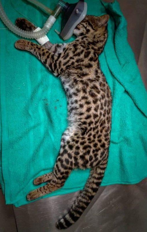 Animal foi resgatado por moradores e levado até uma clínica veterinária – Foto: Polícia Militar/Divulgação