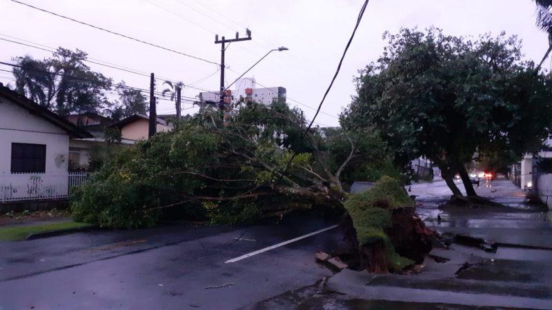 Além dos eventuais dados a veículos e residências, quedas de árvores podem exigir desobstruções de vias- Foto: Gladionor Ramos/NDTV