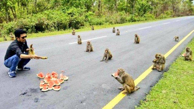 Macacos surpreendem por 'distanciamento social' na Índia – Foto: Reprodução/ND