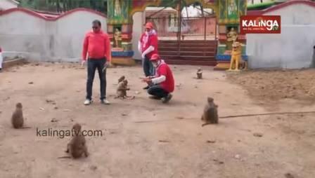Macacos em 'distanciamento social' na saída de templo na Índia – Foto: Reprodução/ND