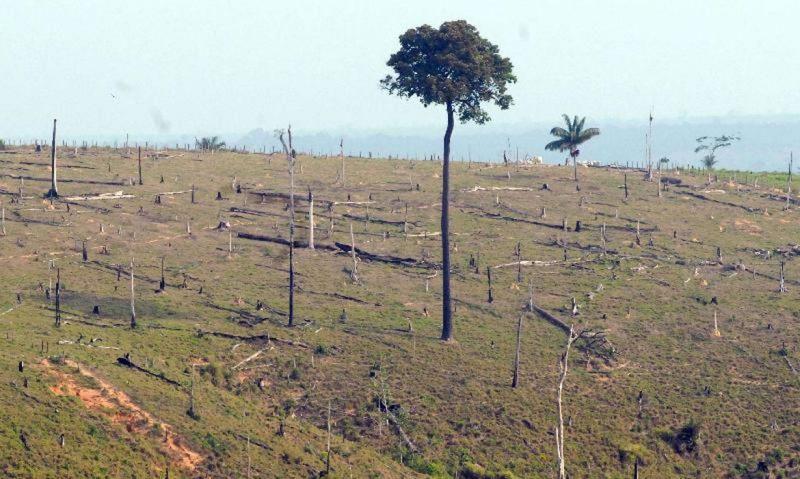 Por meio de uma declaração gravada, Bolsonaro deve falar sobre a Amazônia e as políticas ambientais do seu governo durante Assembleia da ONU – Foto: Arquivo/Agência Brasil