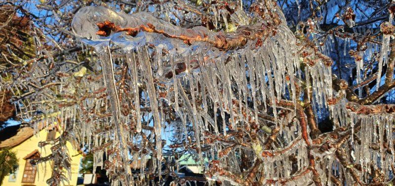 De acordo com Scheuer a queda da temperatura é causada pela atuação de uma massa de ar frio e seco de origem polar. Na foto, o registro feio em São Joaquim, árvore congelou com o frio de quase -5°. – Foto: Mychel Hudson Legnaghi/Divulgação/ND