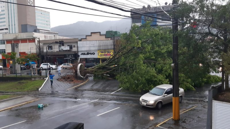 In Jaraguá do Sul, Civil Defense counted almost 100 calls after the cyclone that fell trees all over the city passed - Social Networks