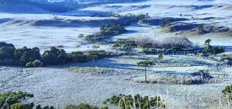 Intense cold and frost marked dawn in the region of São Joaquim, in the Serra.  - Mycchel Legnaghi / Press Release / ND