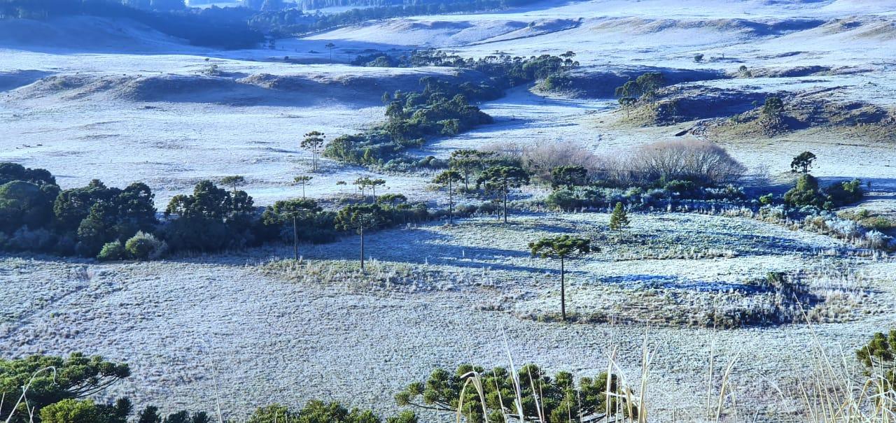 Frio intenso e geada marcou amanhecer da região de São Joaquim, na Serra. - Mycchel Legnaghi/Divulgação/ND