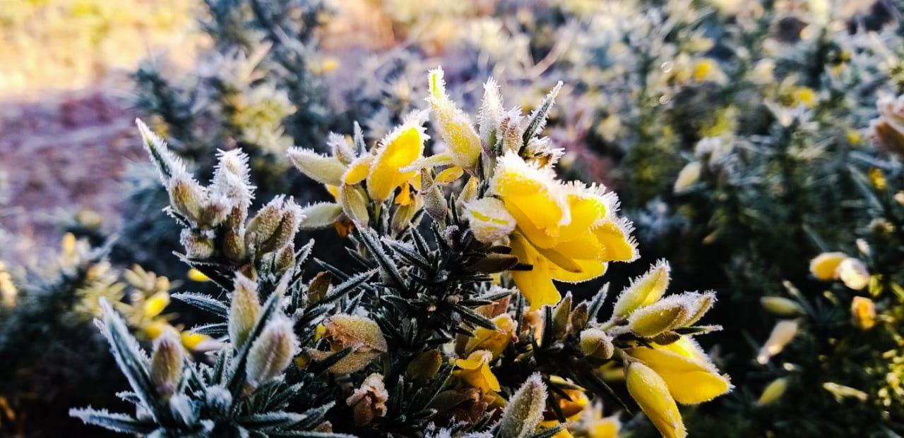 Flores e plantas ficaram cobertas de gelo. - Wagner Urbano/Divulgação/ND
