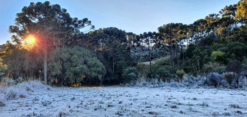 This Saturday morning (4) in the Serra Santa Catarina was marked by the traditional winter landscape with the presence of frost - Mycchel Legnaghi / Press Release / ND