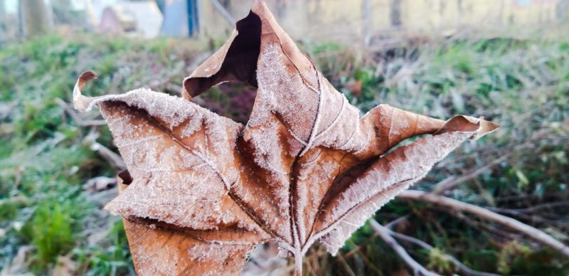 The cold and the frost beautified this Saturday morning in the mountainous region of Santa Catarina - Wagner Urbano / Press Release / ND