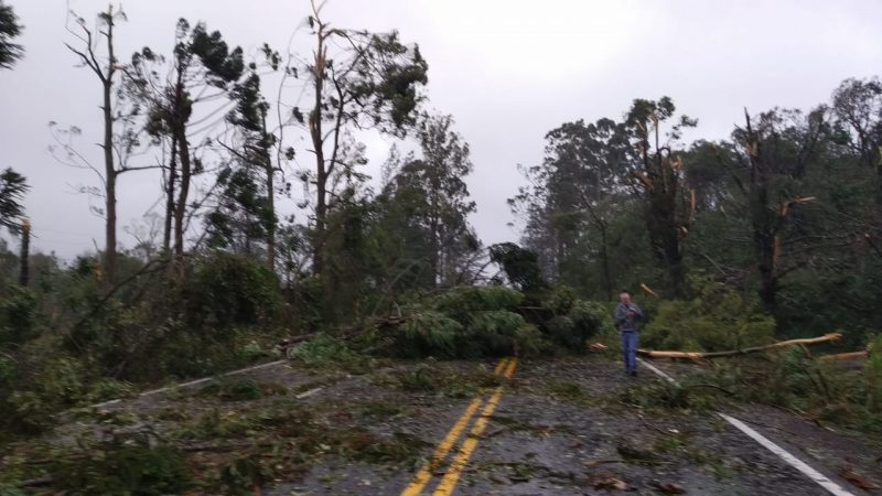 Road that connects Araquari to Joinville was completely blocked by falling trees - Social Networks