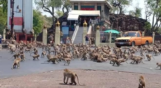 Os macacos agressivos fizeram com que muitos moradores deixassem suas casas. – Foto: Twitter/Reprodução