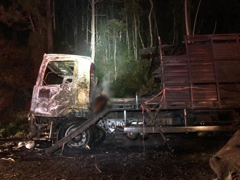 Caminhão pegou fogo enquanto trafegava na BR-470 carregado de gado &8211; Foto: PRF/Divulgação/ND