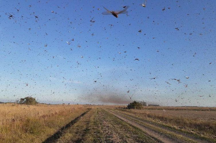 Agricultores do Sul do país estão preocupados com novo avanço da nuvem – Foto: Governo de Córdoba/Divulgação