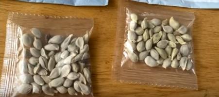 Norte-americanos recebem sementes pelo correio há dois meses – Foto: Reprodução/YouTube