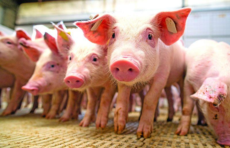 Evento trará informações técnicas ao setor de saúde animal Foto: Arquivo/Wenderson Araujo/Trilux