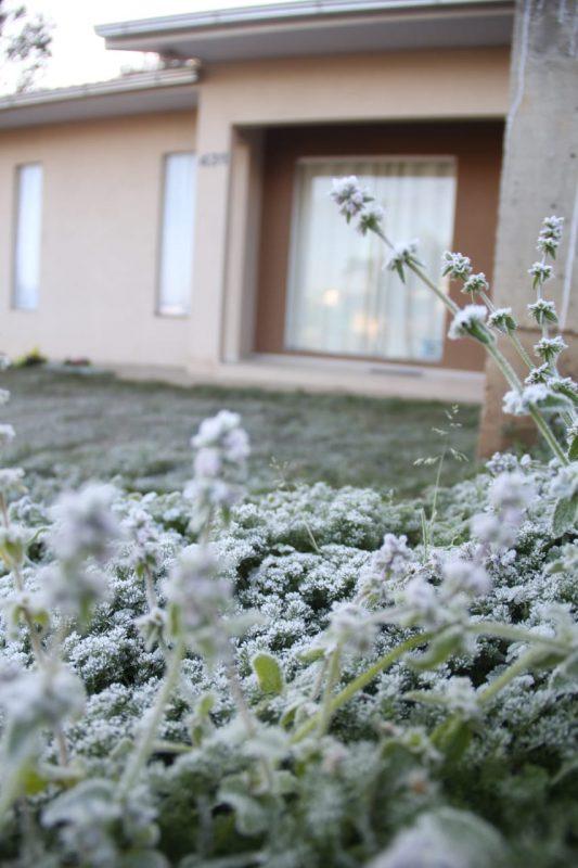 Canoinhas registrou -3°C na madrugada de sábado e camada de gelo enfeitou as plantas da cidade. – Foto: Juceli Moreira