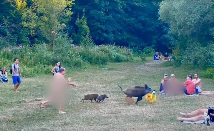 A cena inusitada parou o parque naturista à beira do Lago Teufelssee em Berlim, na Alemanha. Um javali roubou uma sacola onde estava um notebook e foi perseguido pelo dono do equipamento, um homem que tomava sol totalmente nu no local. – Foto: Reprodução/Facebook