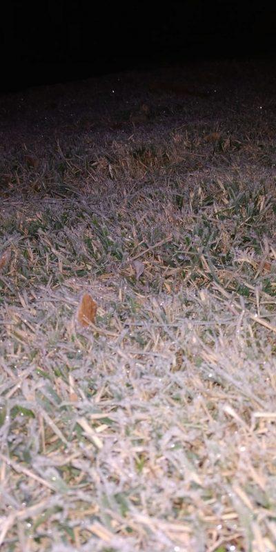 Os gramados das casas congelaram com os -4.2°C, em Chapecó. – Foto: Piter Scheuer e Júnior Volpato