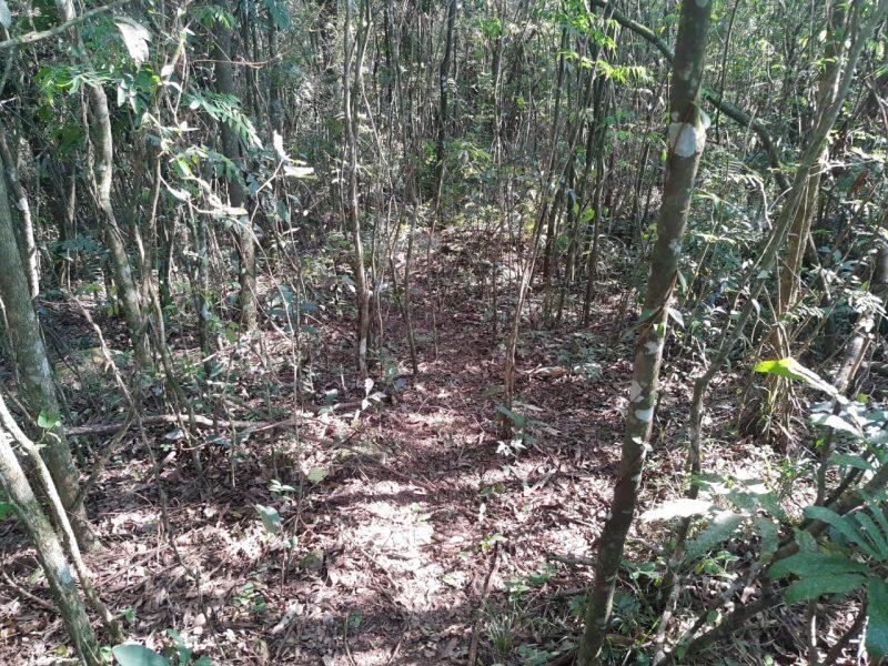 Local em que a Polícia Miliar e Polícia Civil localizaram o corpo que estava escondido - PM/ND