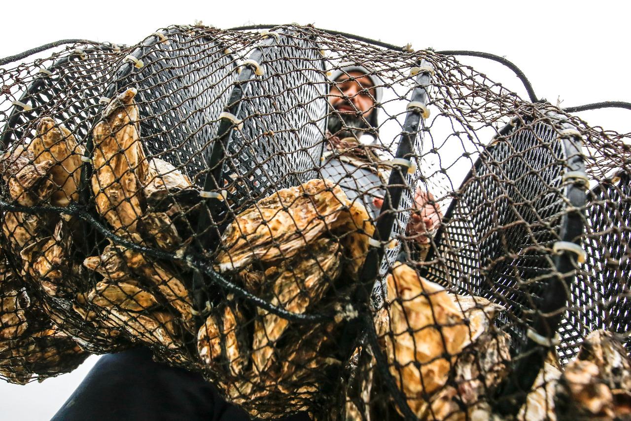 Mar de oportunidades: maricultores da Capital se reinventam em meio à pandemia - Anderson Coelho/ND