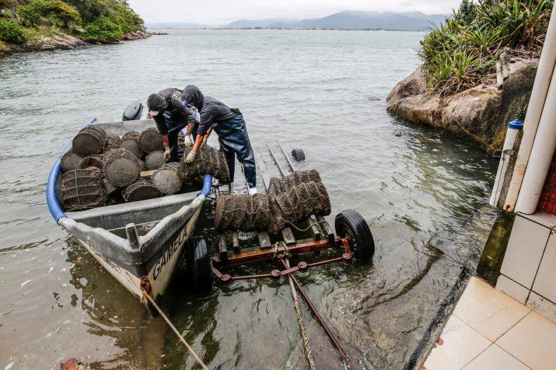 Mar de oportunidades: maricultores da Capital se reinventam em meio à pandemia – Foto: Anderson Coelho/ND