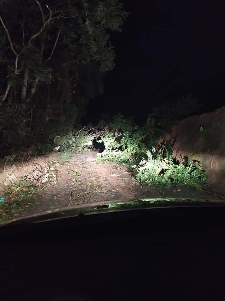 Árvores caíram e bloquearam estradas em Aurora - Secretaria de Agricultura de Aurora