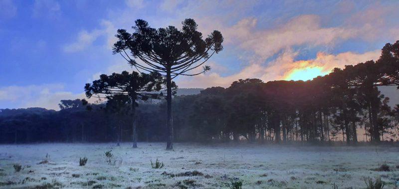 Frio deve se intensificar de sábado para domingo, sobretudo, nas regiões mais altas do Estado – Foto: Mycchel Legnaghi / São Joaquim Online