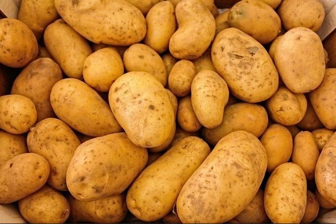 A batata inglesa é rica em vitamina C, vitamina B6, potássio, manganês, magnésio, fósforo, niacina, folato e minerais. Ela pode ser feita cozida, assada, frita e gratinada. A casca contém vitaminas e minerais, por isso, descascá-las pode reduzir significativamente seu valor nutricional. Também contém compostos como flavonoides, carotenoides e ácidos fenólicos que atuam como antioxidantes. – Foto: Pixabay