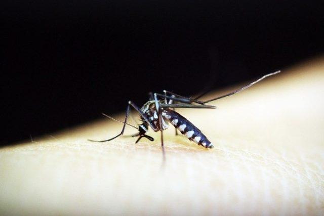 A doença é transmitida pelo mosquito Aedes Aegypti- Foto: Pixabay/Reprodução