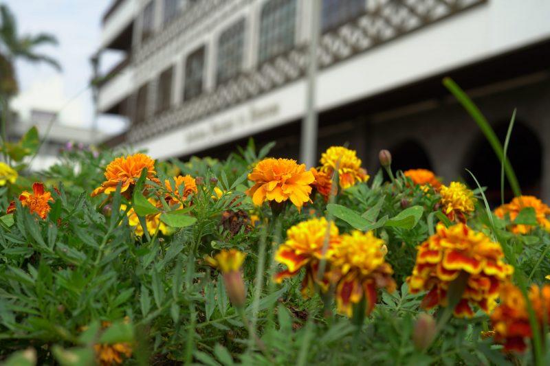 Flores típicas da primavera em Blumenau – Foto: Vinícius Bretzke/NDTV