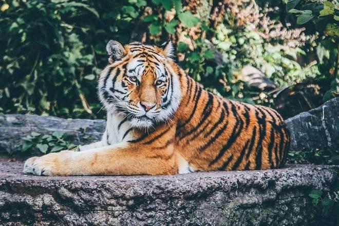 """Populações de animais selvagens estão em """"queda livre"""" desde 1970 anos, apontou um novo relatório da WWF (Fundo Mundial para a Natureza), divulgado na quinta-feira (10). Segundo a ONG, as populações globais de mamíferos, pássaros, anfíbios, répteis e peixes sofreram uma taxa de declínio de dois terços nos números de indivíduos – Foto: Reprodução/Pixabay"""