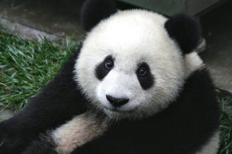 Foi levado em conta a diminuição da quantidade de indivíduos dessas populações, e não a extinção de espécies – Foto: Reprodução/Pixabay