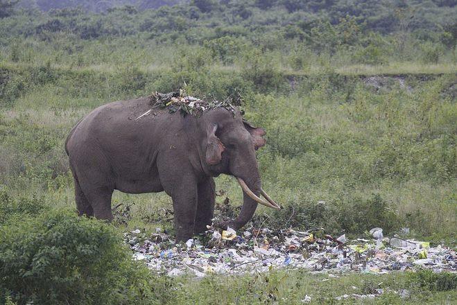 As crescentes mudanças climáticas e o despejo indiscriminado de lixo em locais de natureza também acentuam a queda de populações selvagens – Foto: Reprodução/Daily Mail