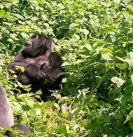 """""""O estudo destaca como a crescente destruição da natureza pela humanidade gera impactos catastróficos não apenas nas populações de vida selvagem, mas também na saúde humana e em todos os aspectos de nossas vidas"""", disse Marco Lambertini, diretor-geral da WWF – Foto: Reprodução/Twitter Uganda Wildlife"""