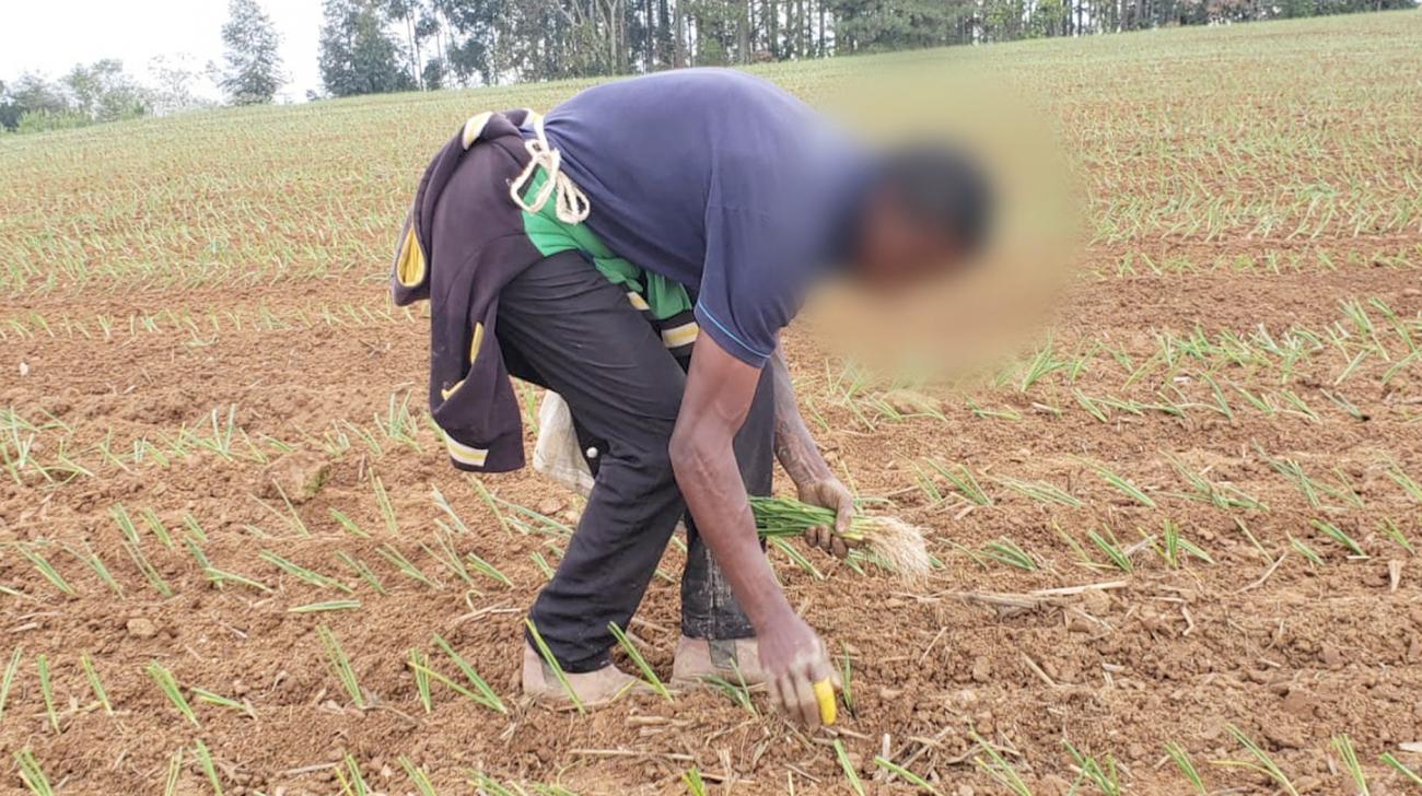 Trabalhadores são encontrados em situação de escravidão nas lavouras de cebola em Ituporanga, no Alto Vale do Itajaí - Divulgação/ND