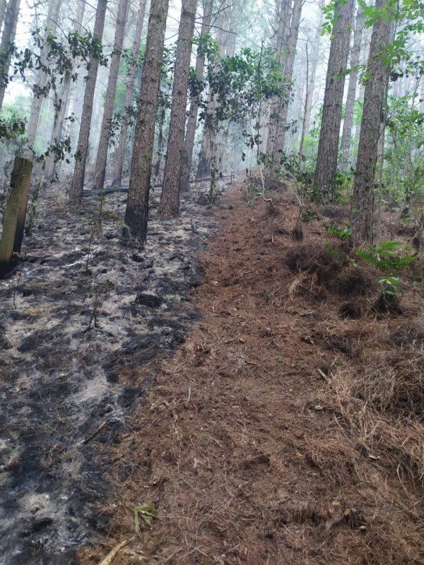 Fogo atingiu área de reflorestamento