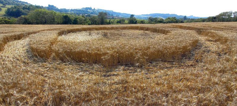 Os círculos foram encontrados por produtor rural. – Foto: Daniela Oruoski/Divulgação/ND