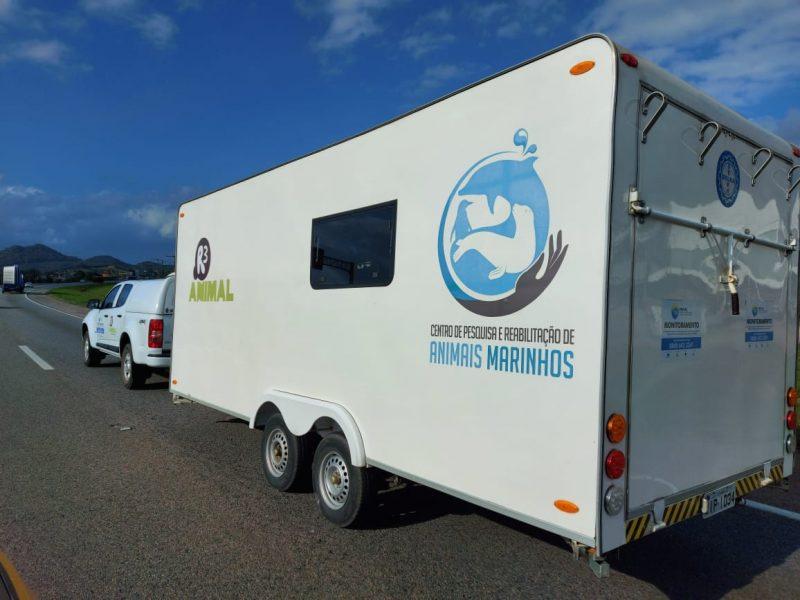 Cachalote-anão foi transportada para Florianópolis – Foto: Divulgação/PRF/ND