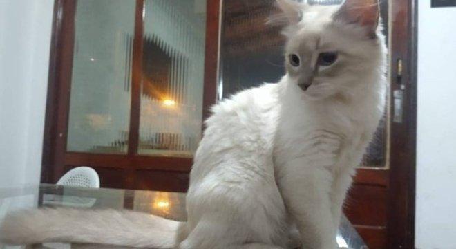 A gata é o primeiro animal a ter diagnóstico confirmado para o coronavírus no Brasil – Foto: Facebook/Reprodução