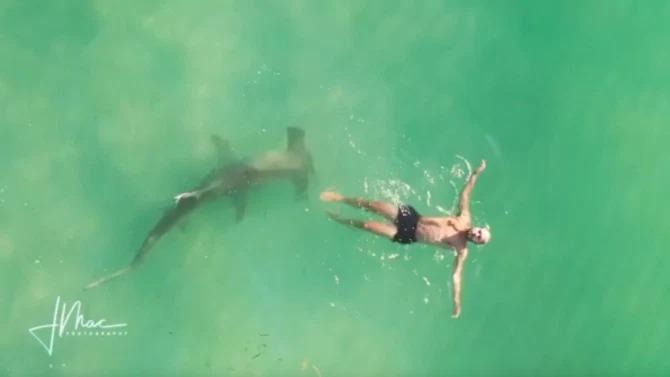 O homem nadava e não percebeu a presença do tubarão – Foto: Instagram/Reprodução