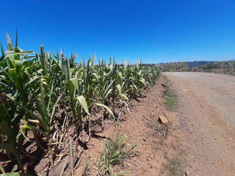Extremo-Oeste do Estado sofre os impactos da estiagem – Foto: Prefeitura de São Miguel do Oeste