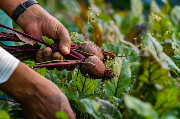 Programa serve para apoiar a agricultura familiar no Estado – Foto: Ricardo Wolffenbuttel/Secom/Divulgação/ND