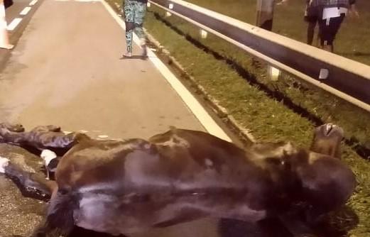 Égua não resistiu aos ferimentos e morreu no local – Foto: Corpo de Bombeiros Militar/Divulgação