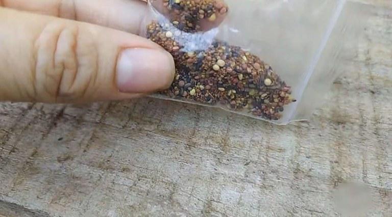 Pacote de sementes é segurada em cima de uma mesa