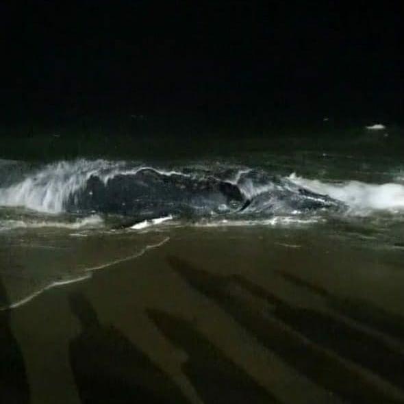 Encalhe ocorreu na noite desta quinta-feira (10) – Foto: PMP-BS/Univille/Divulgação