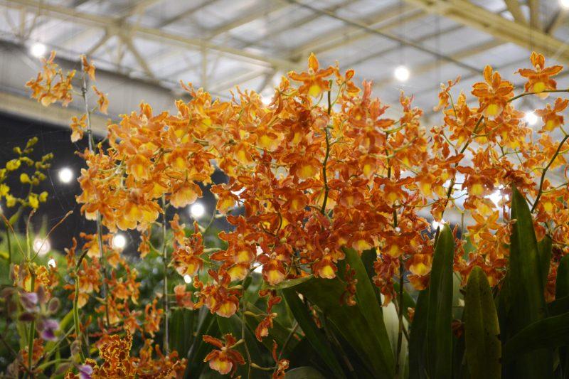 Festa das Flores – Foto: iStock/Divulgação
