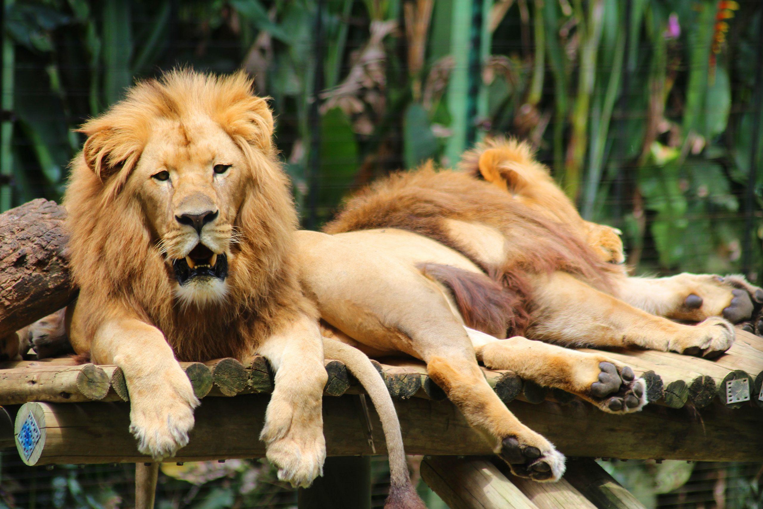 O Zoo Pomerode está no Vale Europeu e conta com mais de 1040 animais e 240 espécies – Foto: Zoo Pomerode