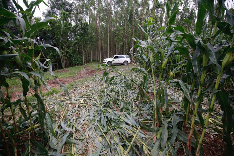 Os veículos passaram por perícia na tarde desta terça-feira (1ª) para saber da procedência dos 10 carros – Foto: Anderson Coelho/ND
