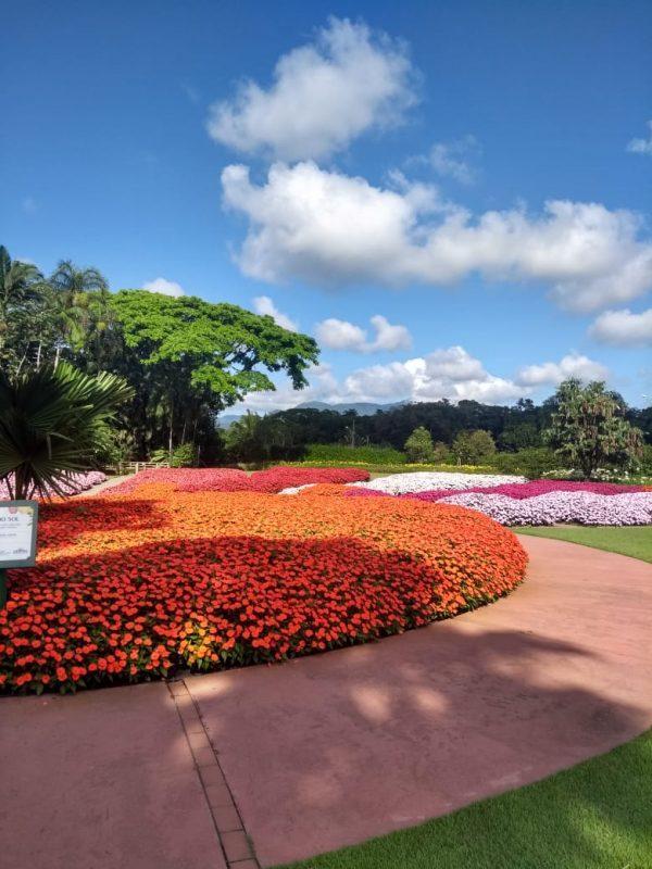 Colorido da Agrícola da Ilha encanta os visitantes – Foto: Divulgação/ND