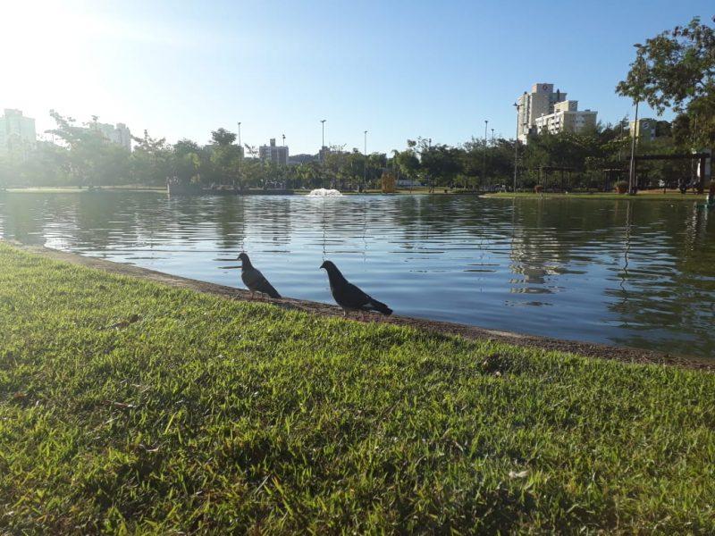 Foto do Parque Ramiro, em Blumenau. Aparecem dois pássaros às margens do lado e um gramado.
